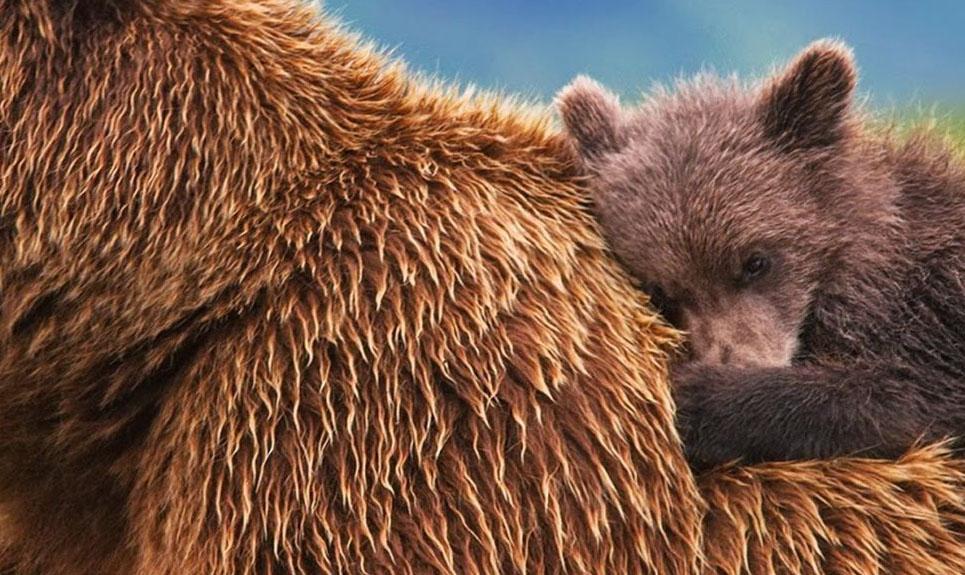 Ursos (Dual Audio)